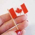 画像2: 〒 ケーキピック/カナダ国旗(5本入) (2)