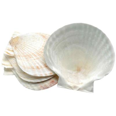 画像1: ホタテ貝の殻(4枚セット) (1)